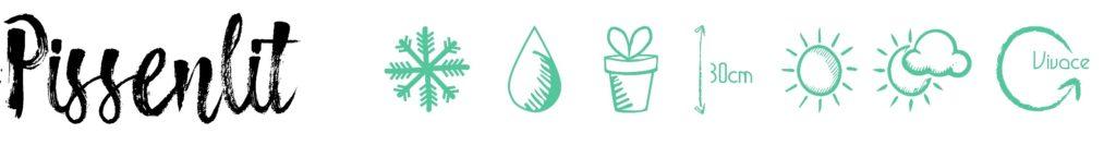 Pissenlit pictogramme