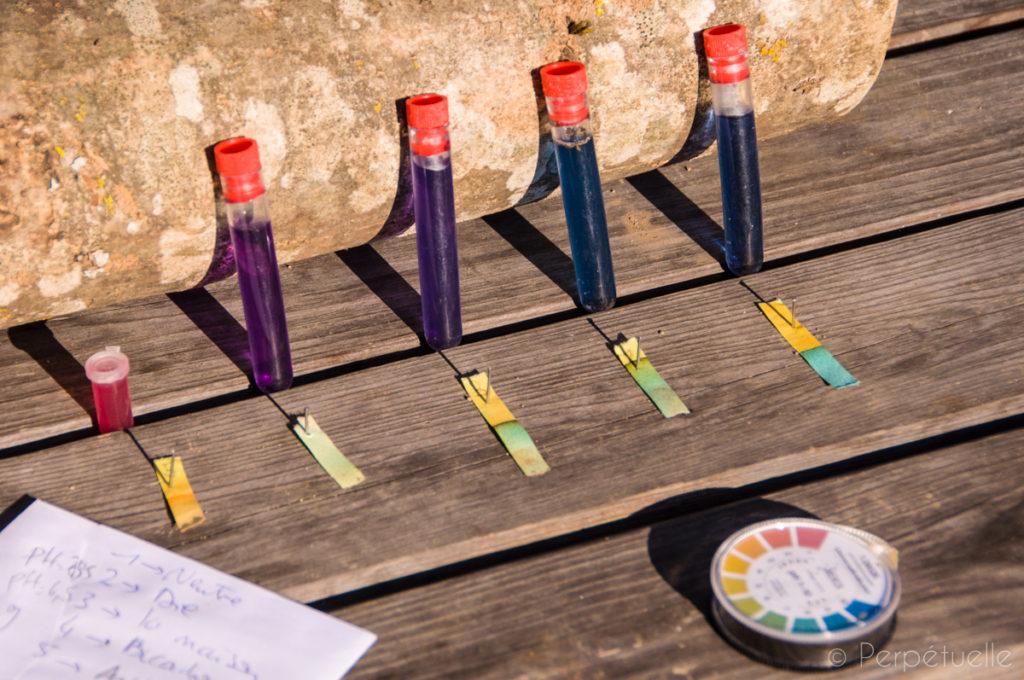 Estimez le pH de votre sol : test du chou rouge et papier pH.