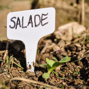 Salade potager pour enfant