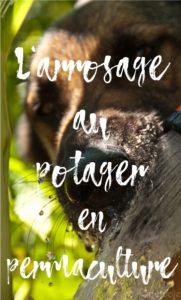 L'arrosage au potager en permaculture