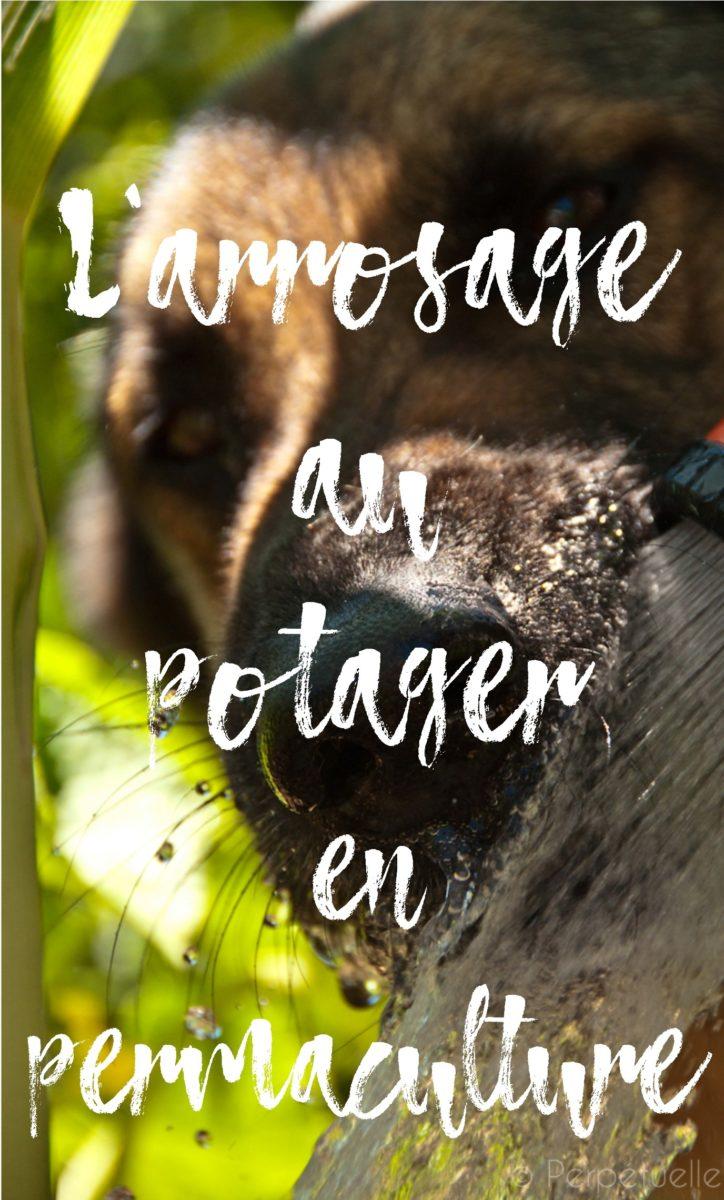 L 39 arrosage au potager en permaculture perp tuelle - Arrosage automatique jardin potager ...