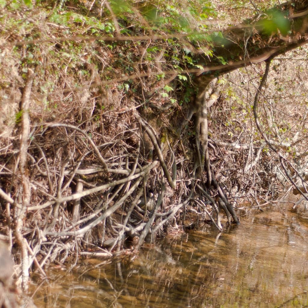 Les racines des végétaux tiennent le talus
