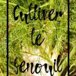 Cultiver le fenouil en permaculture