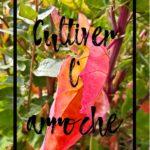 Cultiver l'arroche en permaculture