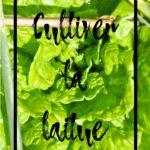 Cultiver la laitue en permaculture